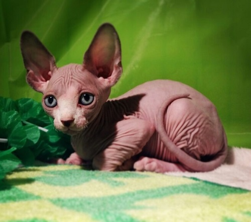 My Friends Told Me About You / Guide bambino kittens for